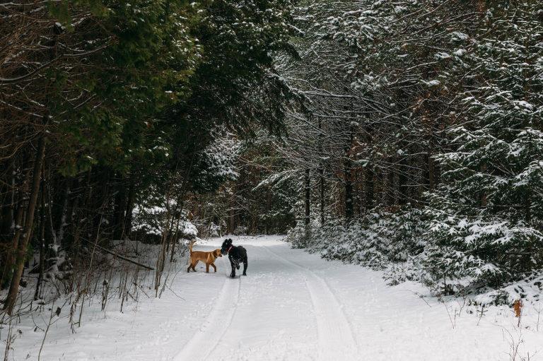 dog walking adventures