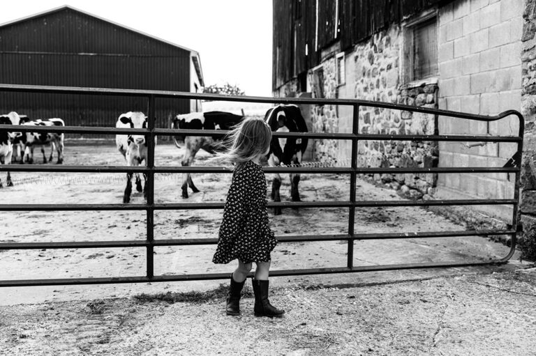 Little girl watching the dairy cows